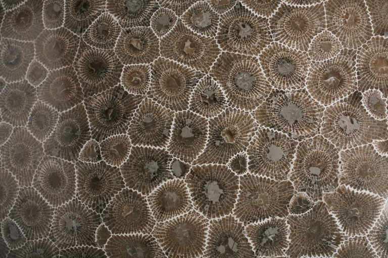 Close up of Petoskey Stone Pattern